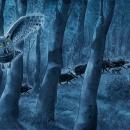 Wenn-es-Nacht-ist_Wald_Pr_AL15-6